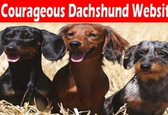 Courageous Dachshund Website 2021